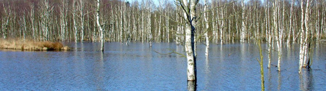 Bild vom Sankelmarker See als Kopfbild der Website